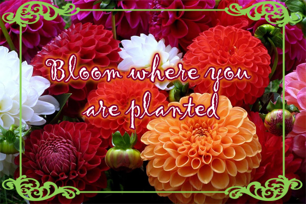 Bloom Where Planted LDS Mormon Ecard